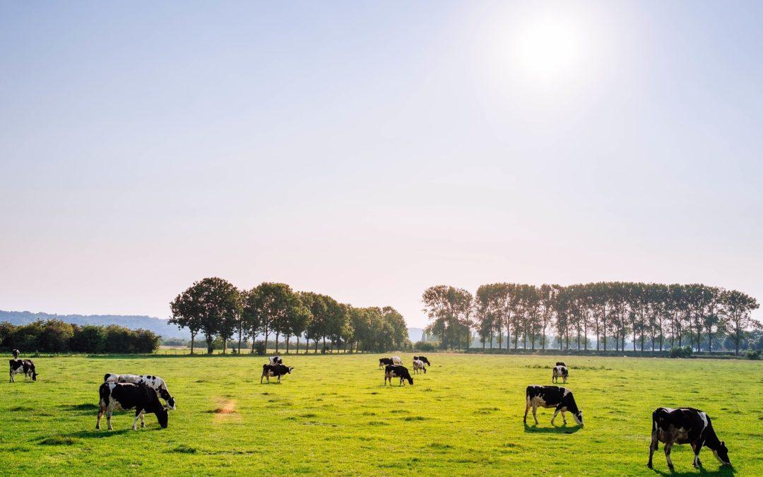 REVUE DE PRESSE – Ruée vers l'Est pour la filière bovine française